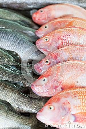 新鲜被捉住的海鱼图片
