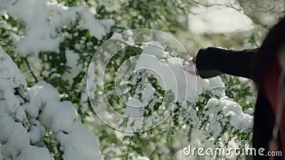 无法认出的常青树妇女感人的分支的手与雪的 股票视频
