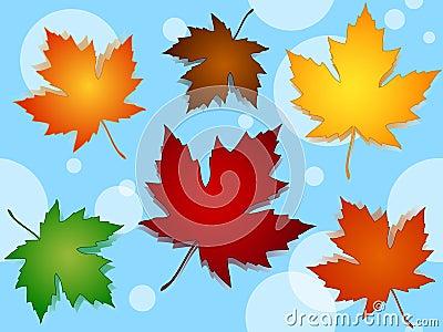 无缝的槭树叶子秋天颜色