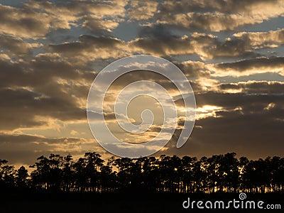 黄昏的佛罗里达沼泽地