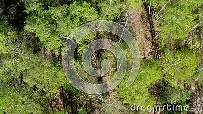 春天的森林空景 影视素材
