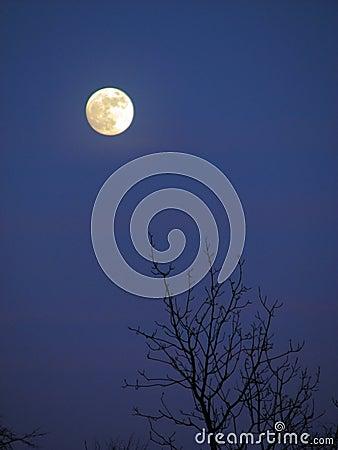 背景夜间月亮月光晚上结构树.图片