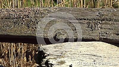 有地衣的老分裂路轨篱芭在Grandview国家公园,狂放的美妙的WV 股票录像