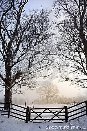 有薄雾的早晨-冬天-英国