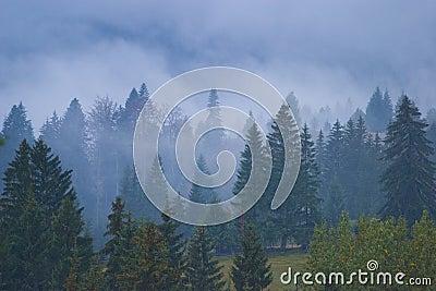 有薄雾的森林