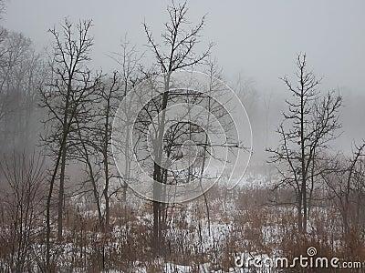 有雾的日在北伊利诺伊