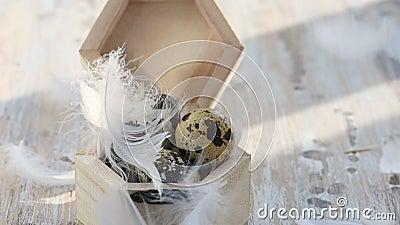 木箱中的复活节鹌鹑蛋 羽毛掉落 股票视频