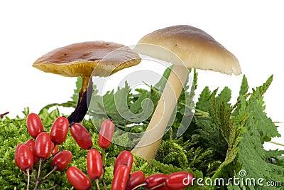 木蘑菇从青苔增长
