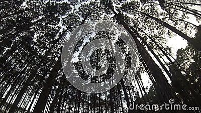 杉木森林圈 股票视频