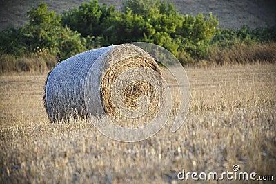 来回大包的干草
