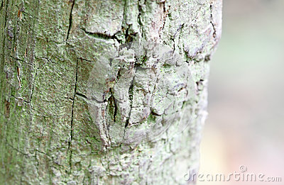 构造老结构树