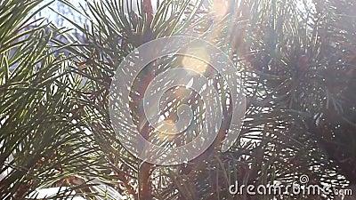 树在晴天 股票视频