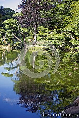 树的反射沿蓝色湖的
