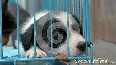 栖身于篱笆后的安眠小狗等待被救和收养到新家的特写 动物庇护所 股票视频