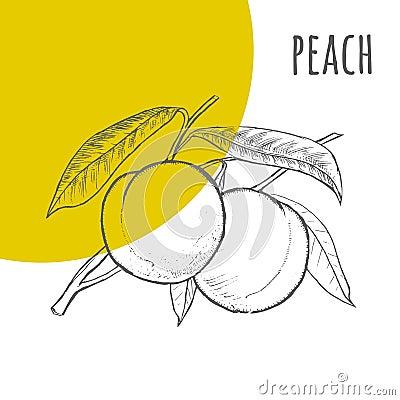 桃子徒手画的铅笔被画的剪影 桃子束的例证在分支的与叶子 一部分的套