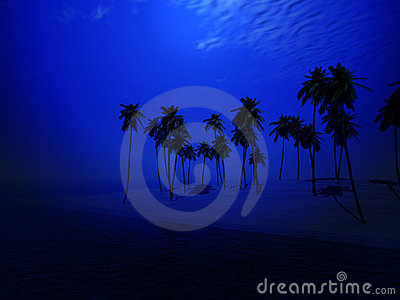 棕榈树海岛44