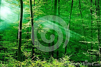 高清download 森林光 库存图片.