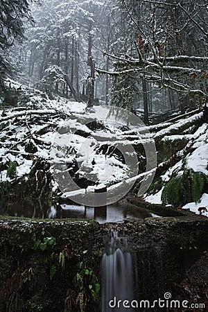 森林有薄雾的风景雪谷冬天