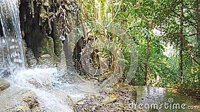 森林近树瀑布水瀑布 影视素材