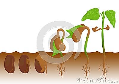 图象植物生长顺序.图片