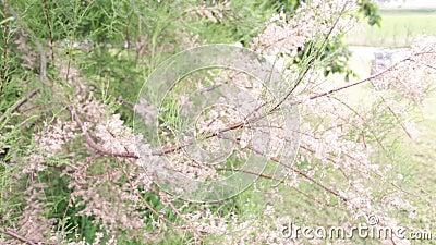 植物,花,树-美好的细节 股票录像