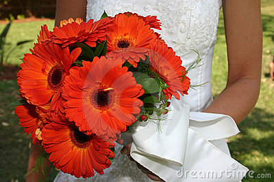 橙色2朵的雏菊