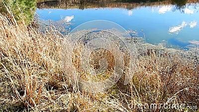 池塘云彩反射, Lilly填塞Grandview国家公园, WV 影视素材