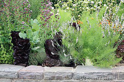 河床被扶养的蔬菜