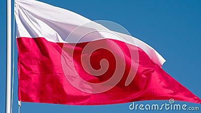 波兰的状态旗子 股票视频