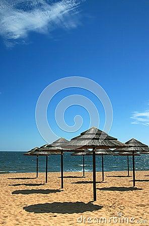 海滩树荫2