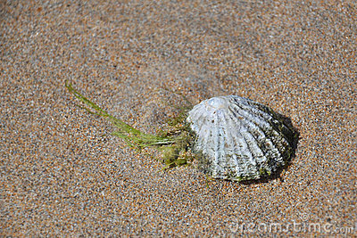 海滩沙子壳