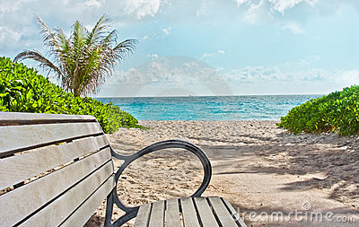 海滩热带佛罗里达迈阿密的天堂