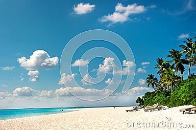 海滩热带海岛的掌上型计算机