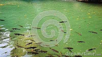清水瀑布中的鱼礁 影视素材