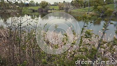 湖滨植被 股票视频