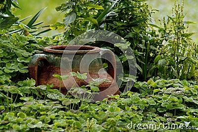 湿罐的三叶草