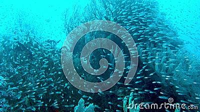 潜水 有彩鱼和珊瑚礁的海底世界 热带礁 美丽的水下土地 股票录像