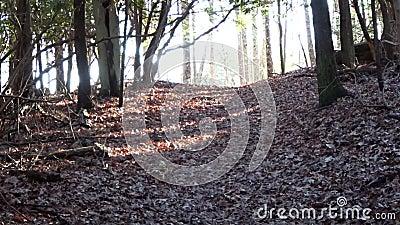 灰鼠剪影横穿Castle Rock足迹在Grandview国家公园 影视素材