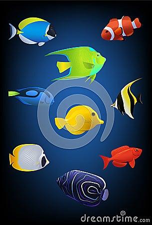 热带五颜六色的鱼