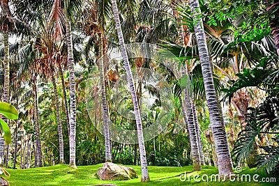 热带棕榈庭院在美好的天堂