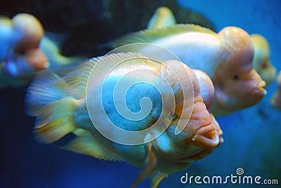 许多五颜六色的热带海鱼.图片
