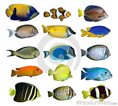 热带鱼的礁石