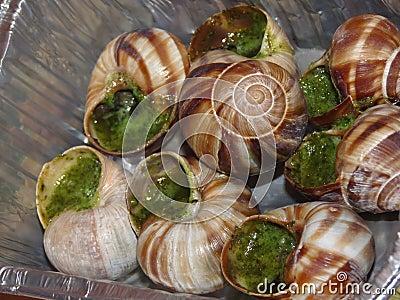 煮熟的蜗牛