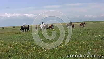 牧群和干草原
