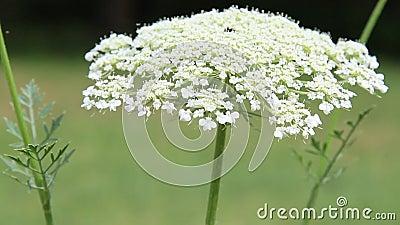 狂放的白花
