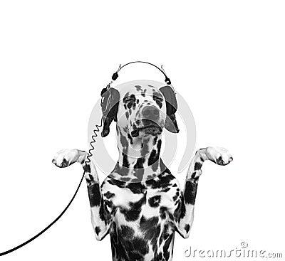 狗听音乐和跳舞