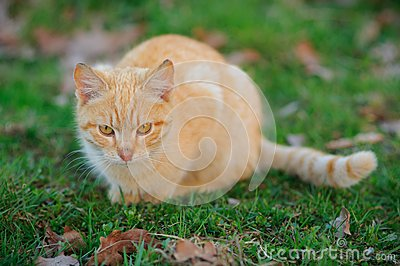 猫偷偷靠近