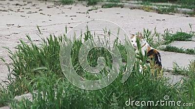 猫在草和神色掩藏 影视素材