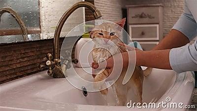 猫被主人洗在浴盆里 影视素材