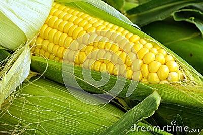 玉米棒玉米